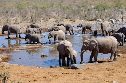 A herd of elephants at a waterhole in Etosha National Park, Namibia
