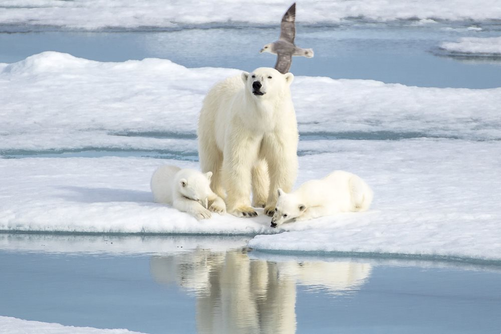 SAVE on 2020-22 Polar Voyages
